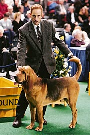 Christopher Guest, Best in Show