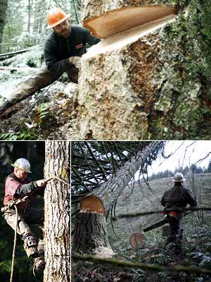 AX MEN (History Channel) Logging in Oregon is deadly enough with the possibility of snapped cables, runaway logs, equipment failure, and falls. But you also…