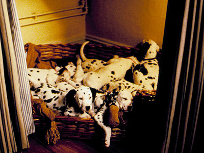 101 Dalmatians | All 101 Dalmatians (Dalmatians — duh!) One Hundred and One Dalmatians In this case, at least, quantity does equal quality.