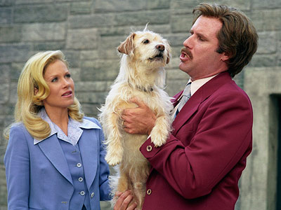 Will Ferrell, Christina Applegate, ... | BAXTER (Border Terrier) Anchorman: The Legend of Ron Burgundy BAXTER!!!! The sight of Jack Black punting the poor pup off a bridge leaves us all…