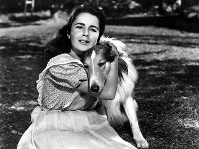 Elizabeth Taylor | LASSIE (Rough Collie) The Lassie TV show and movies Oh, Lassie. She's the only dog pretty enough to steal the spotlight from Elizabeth Taylor (in…