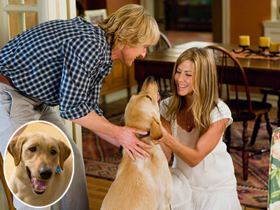 Marley and Me, Jennifer Aniston, ... | MARLEY (Yellow Lab) Marley & Me , book and movie A little schlocky? Sure. But with one look at those twinkling eyes and tousled blond…