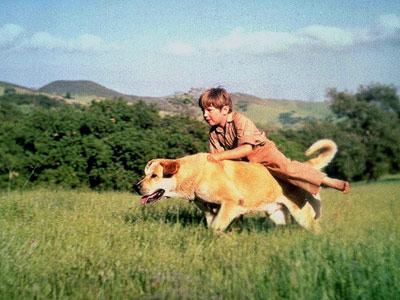 Old Yeller | OLD YELLER (Mutt) Old Yeller , book and movie) A little boy. A rabies outbreak. A shotgun. If you didn't cry at this ending, you're…