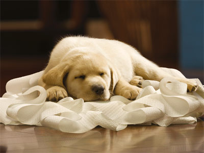 THE TOILET PAPER PUPPIES (Yellow Labs) Cottonelle ads What do dogs have to do with toilet paper? Who gives a ----! They're so darn cute,…