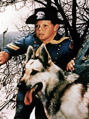RIN TIN TIN (German Shepherd) The Rin Tin Tin stories from radio, TV, and film Quite possibly the world's first canine superstar, Rin Tin Tin…