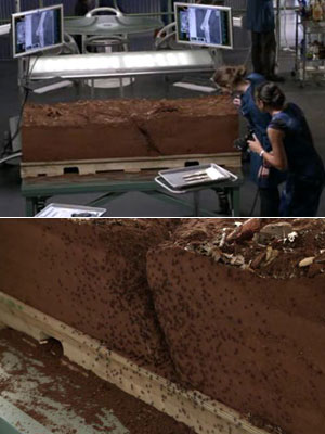 Bones   ''In 'The Dentist in the Ditch,' there were 1000 CGI spiders modeled in the scene.'' In addition to hatching spider eggs on a clay-encased skeleton,…
