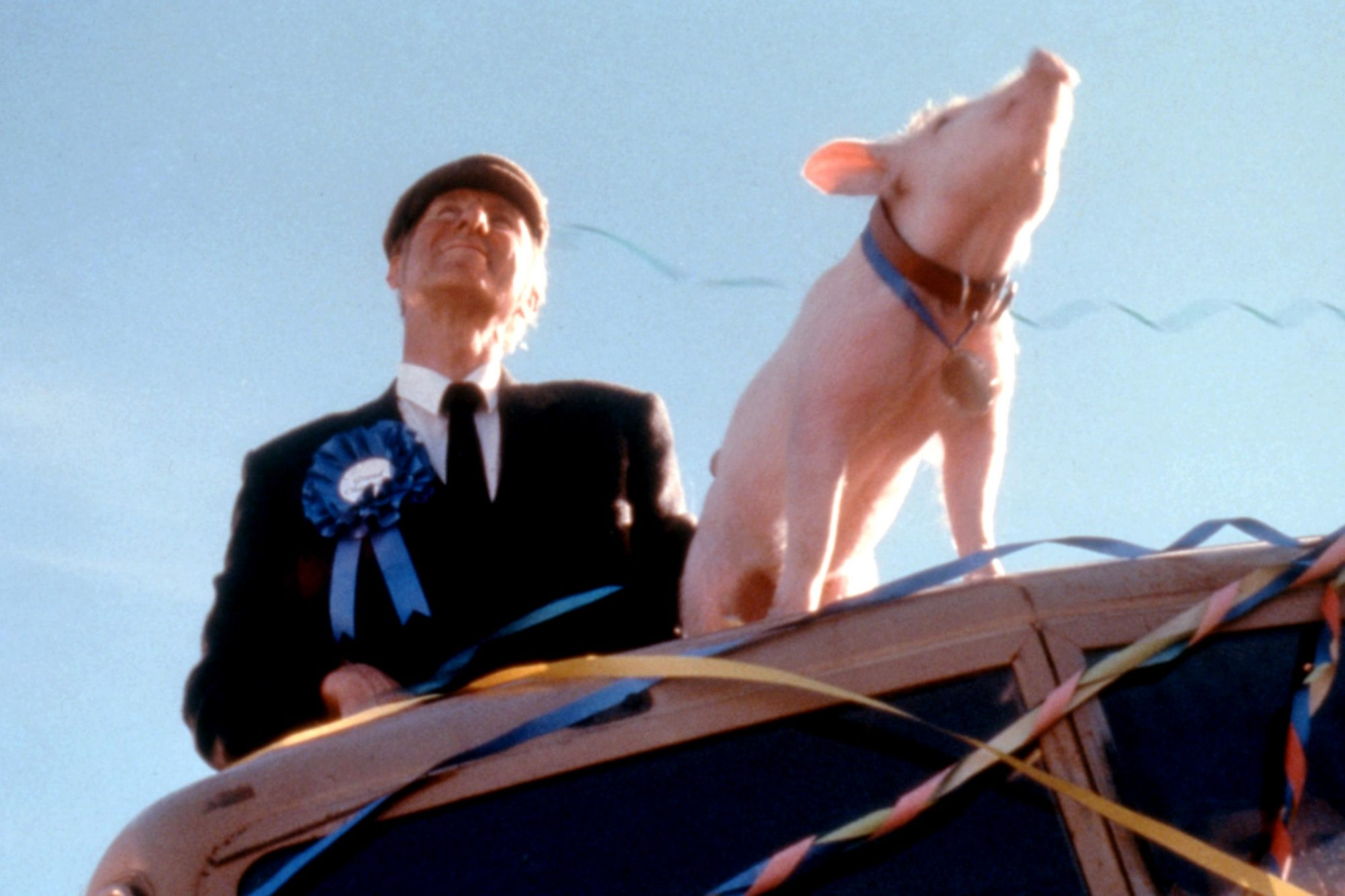 BABE: PIG IN THE CITY, James Cromwell, Babe the pig, 1998, (c)MCA Universal/courtesy Everett Collect