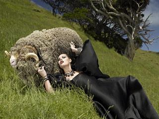 Top-Model-sheep-Zealand