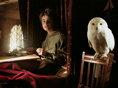 Daniel Radcliffe, Harry Potter and the Prisoner of Azkaban | Harry Potter series Of all the pets in the Potter-verse, the superstar is Hedwig, Harry Potter's snowy owl; the film franchise's iconic musical theme is…