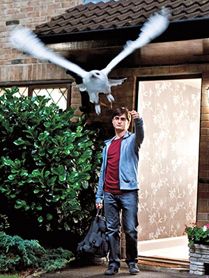 Harry Potter and the Deathly Hallows - Part 1   As Part 1 begins, Harry (Daniel Radcliffe, pictured), Ron (Rupert Grint), and Hermione (Emma Watson) have left Hogwarts School of Witchcraft and Wizardry and are…