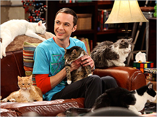 big-bang-soft-kitty