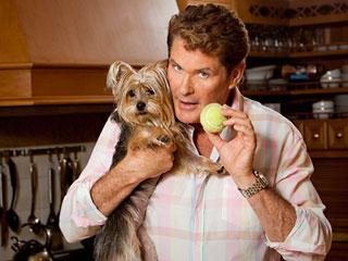 David-Hasselhoffs-dog