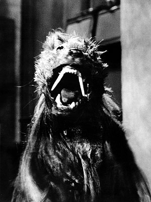 The Killer Shrews (1959) The biggest star in this movie must be Lassie, who so graciously used a free day to don a killer-shrew costume…