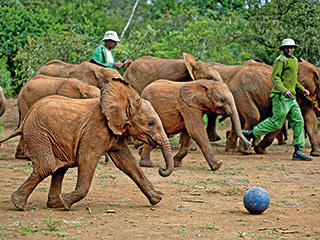 Born to Be Wild | PHYSICAL ENRICHMENT Baby elephants play soccer in Born to Be Wild 3D