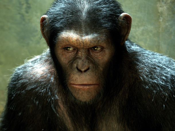 SEE EVIL, HEAR EVIL, SPEAK EVIL? Caesar J. Chimpanzee, seen here doing his best imitation of the shifty-eyed dog from The Simpsons