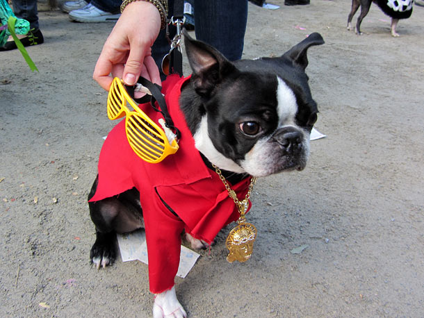 Imma let you finish, but this Boston Terrier has the best costume of all time. Of all time!