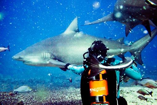 Shark Shoot 5