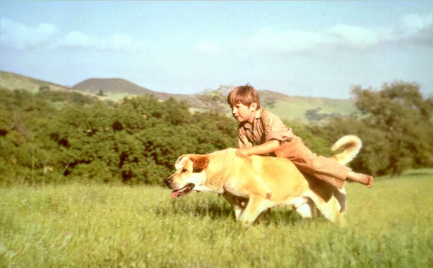 Old Yeller | Boy meets dog. Dog steals hens from boy's farm. Boy befriends and trains dog. If I don't have much to say about one of the…