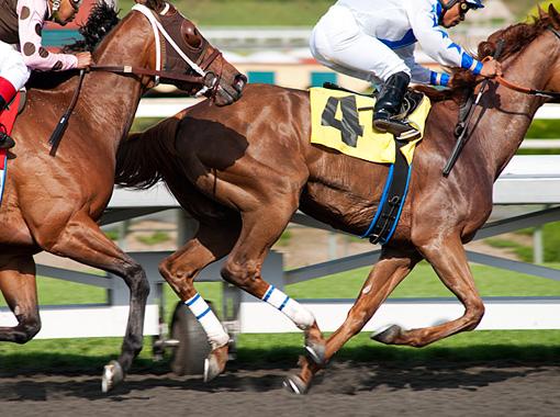 LUCK HORSES