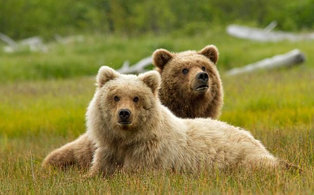 Disney Bear Documentary