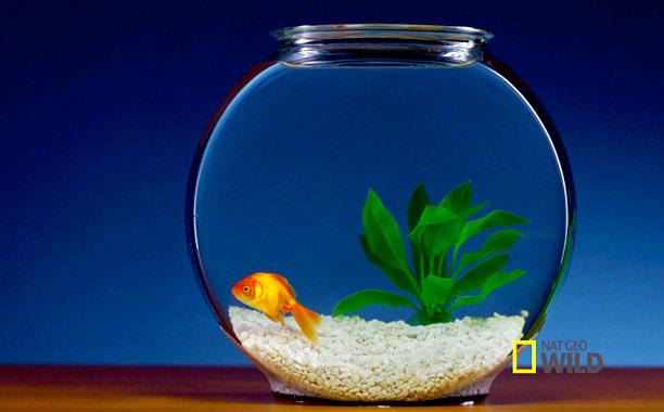 NAT GEO FISH BOWL