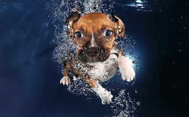 Beagle mix Ava looks like she just saw a kraken.