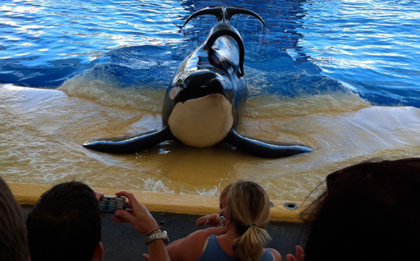Blackfish for Best Documentary — Feature