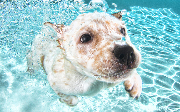 Corey, a lab/cattle dog mix, is just floating through life...and he's just fine with that.