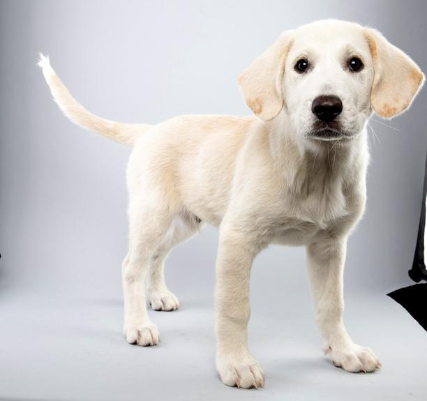 Puppy Bowl 04