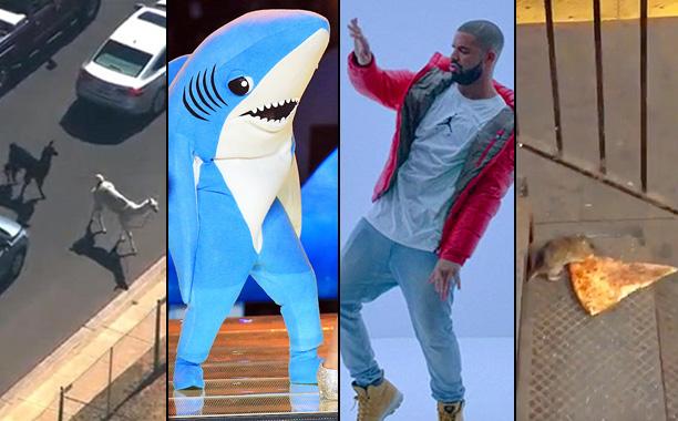 2015's Biggest Memes