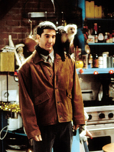 Friends, David Schwimmer | Key Role: Beyond doubling as Betsy, the primate Patient Zero of Outbreak (1995), and as Marcel on Friends , they had a cameo in Showgirls…