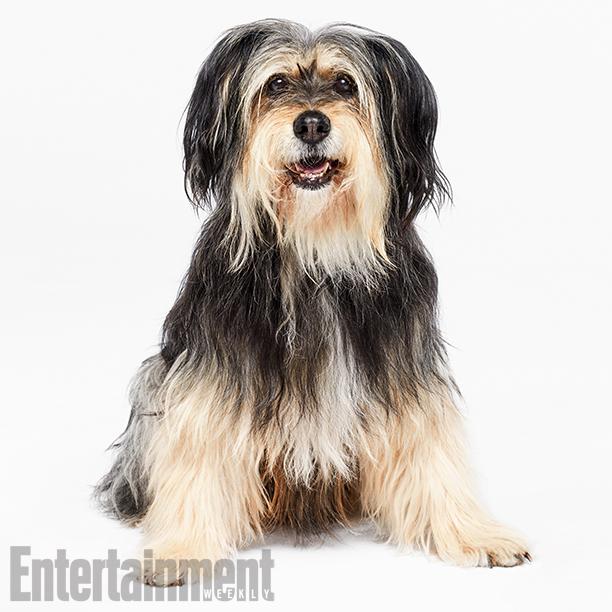Sparky (Paul Anka the Dog)