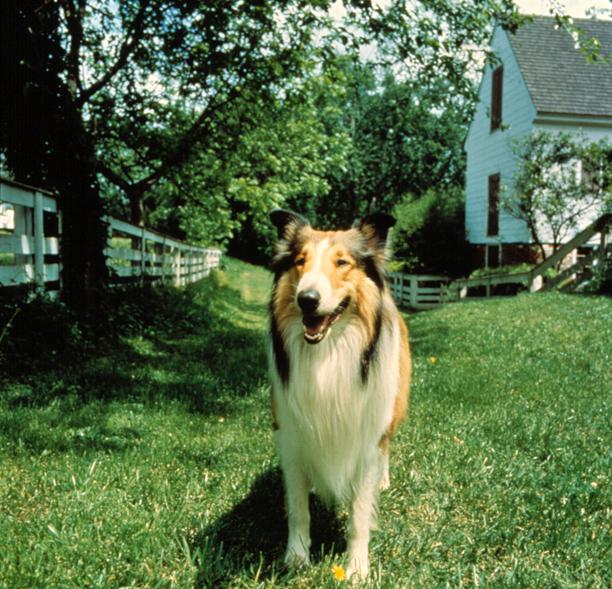 Lassie, Lassie