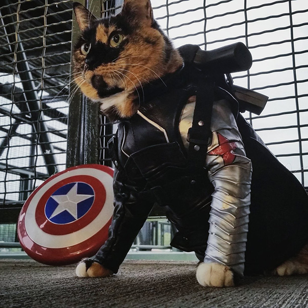 The Winter Soldier, Captain America