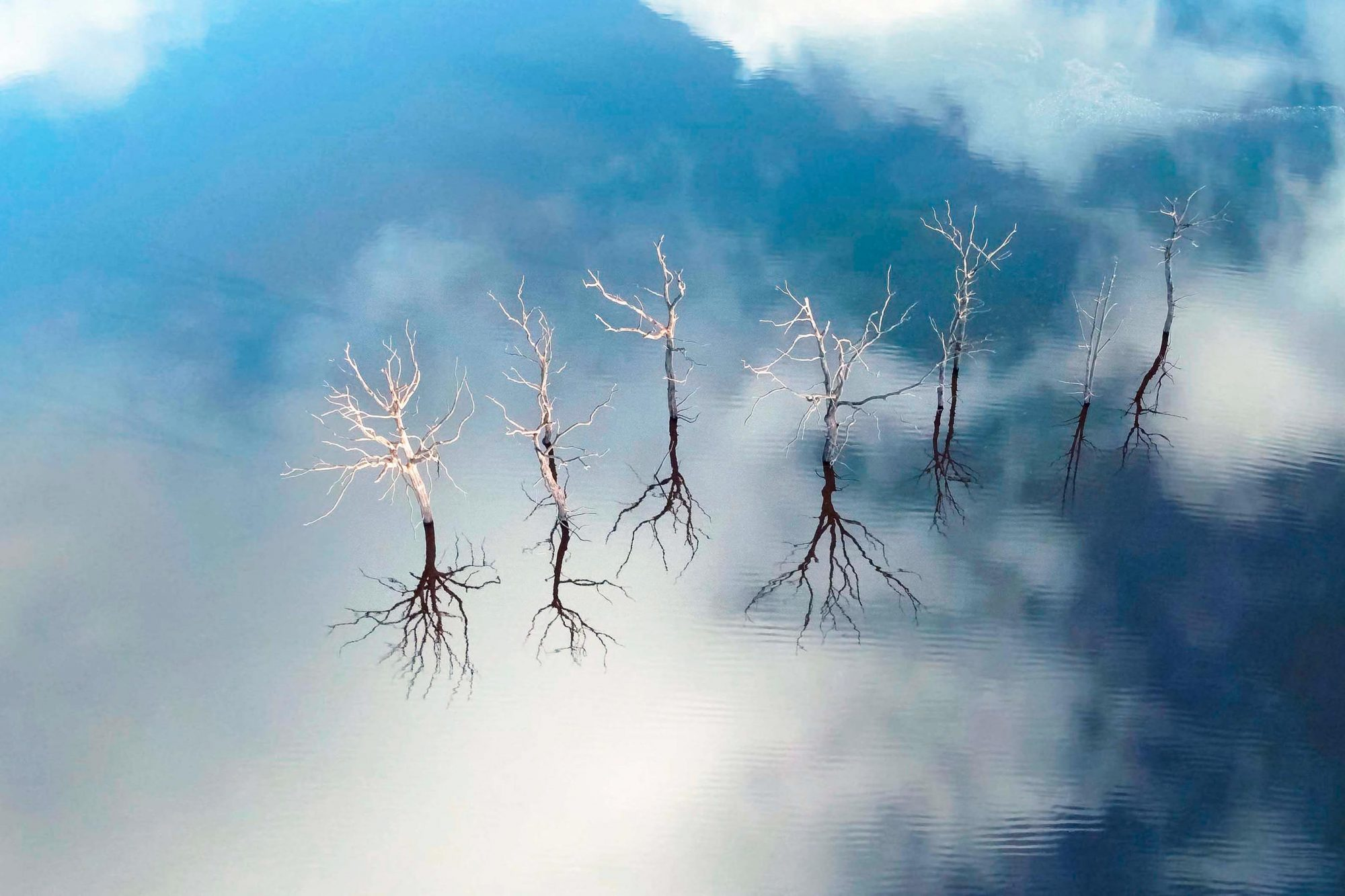 Trees Emerging From Lake Guerlédan, France