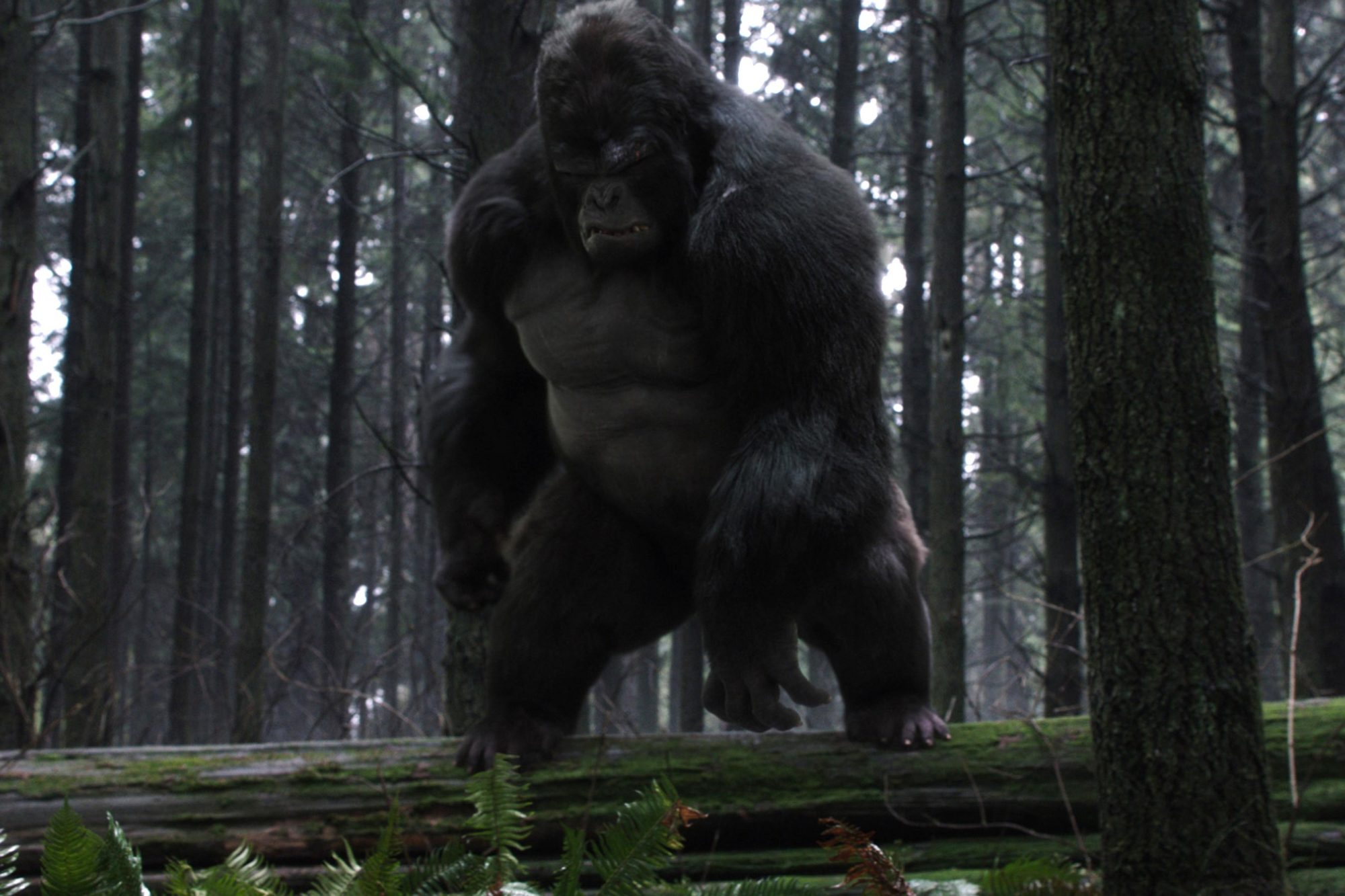 Attack on Gorilla City