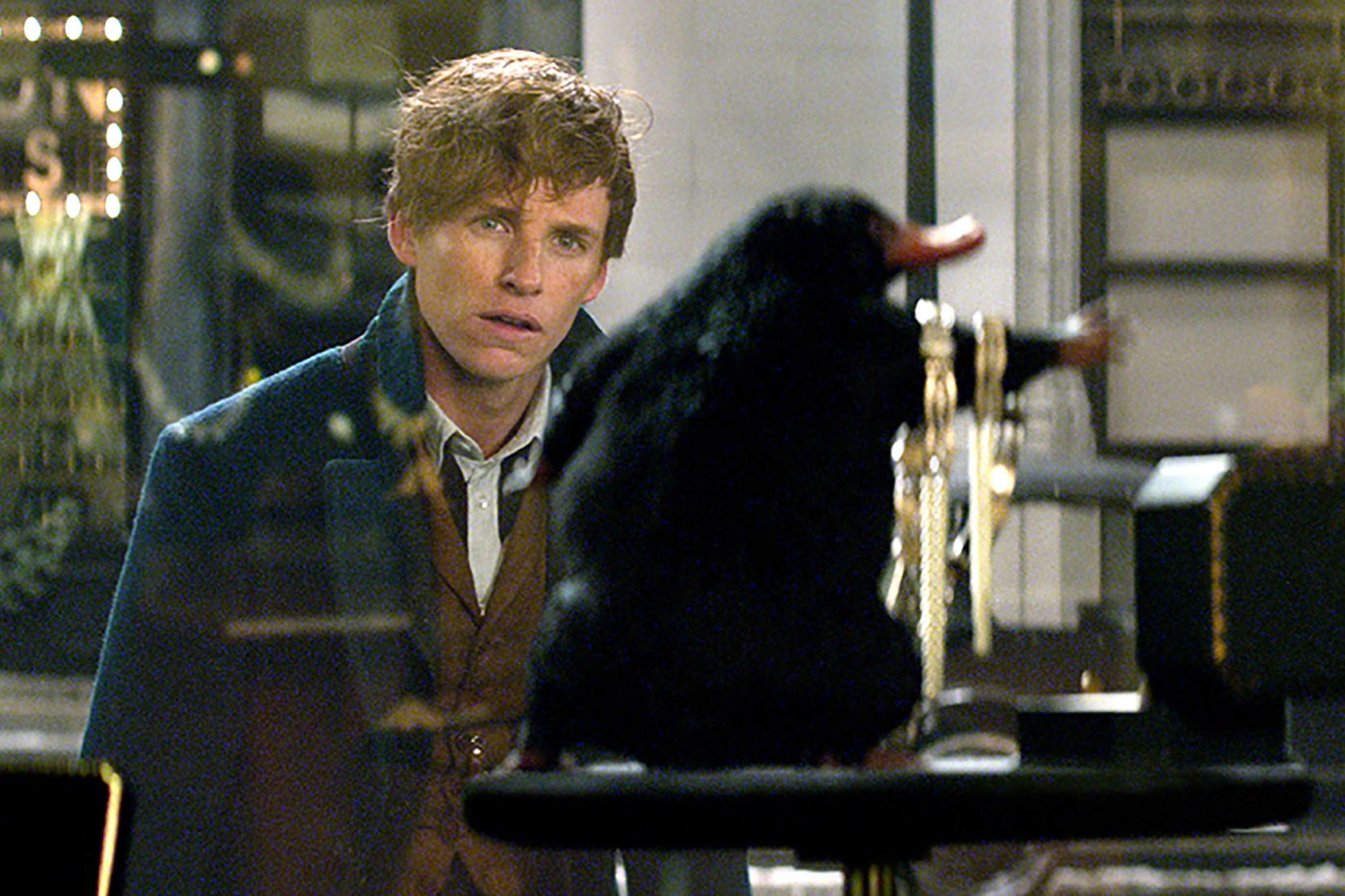 FANTASTIC BEASTS AND WHERE TO FIND THEM, Eddie Redmayne, and a Niffler, 2016. © Warner Bros. /