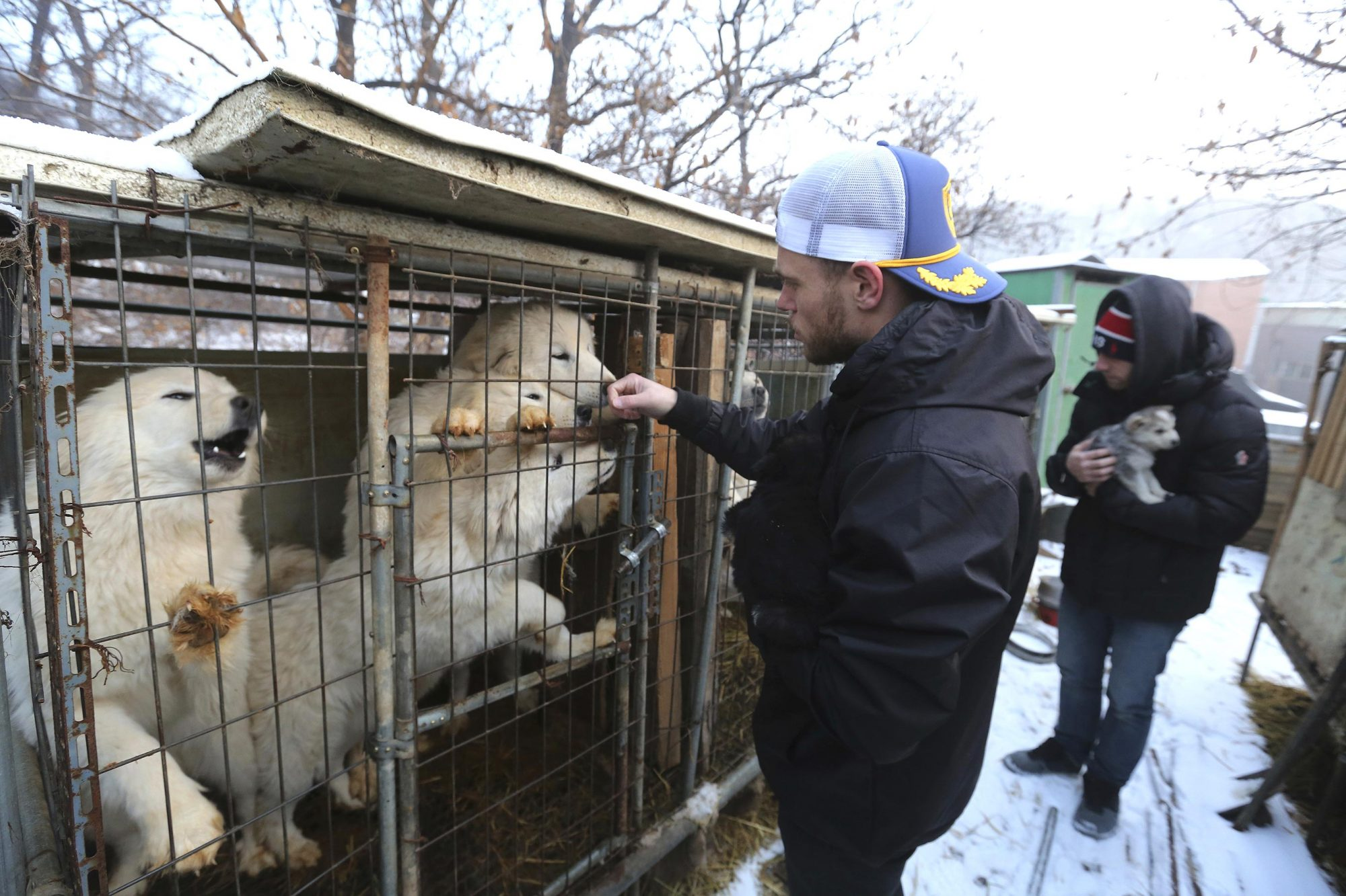 Kenworthy Korean Dog Rescue, Siheung, South Korea - 23 Feb 2018