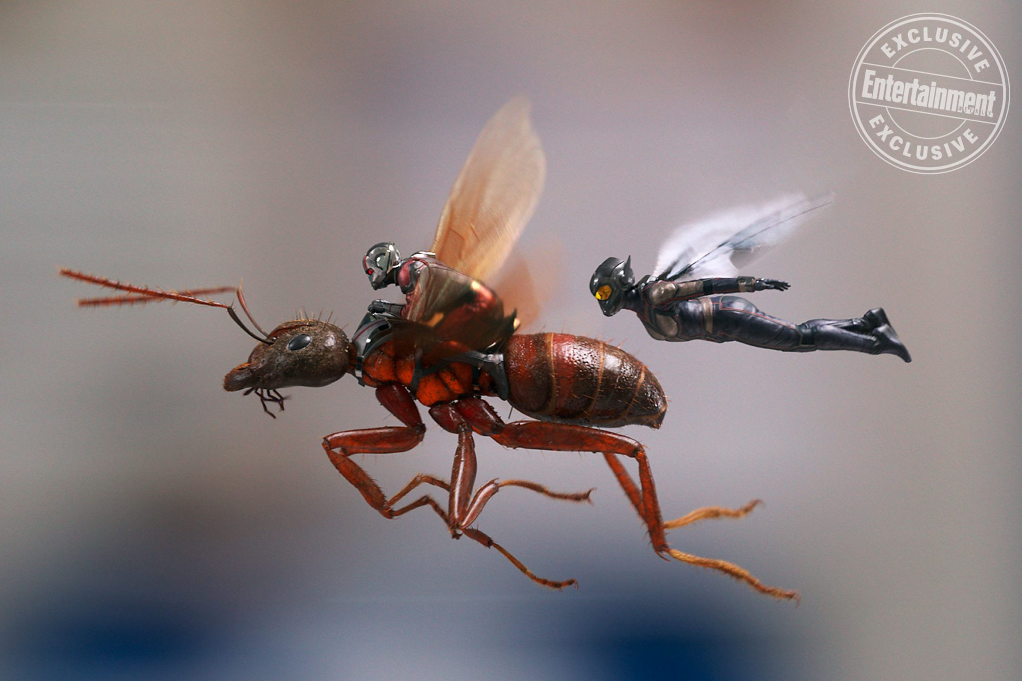 Ant-man-wasp_2937923486942370329