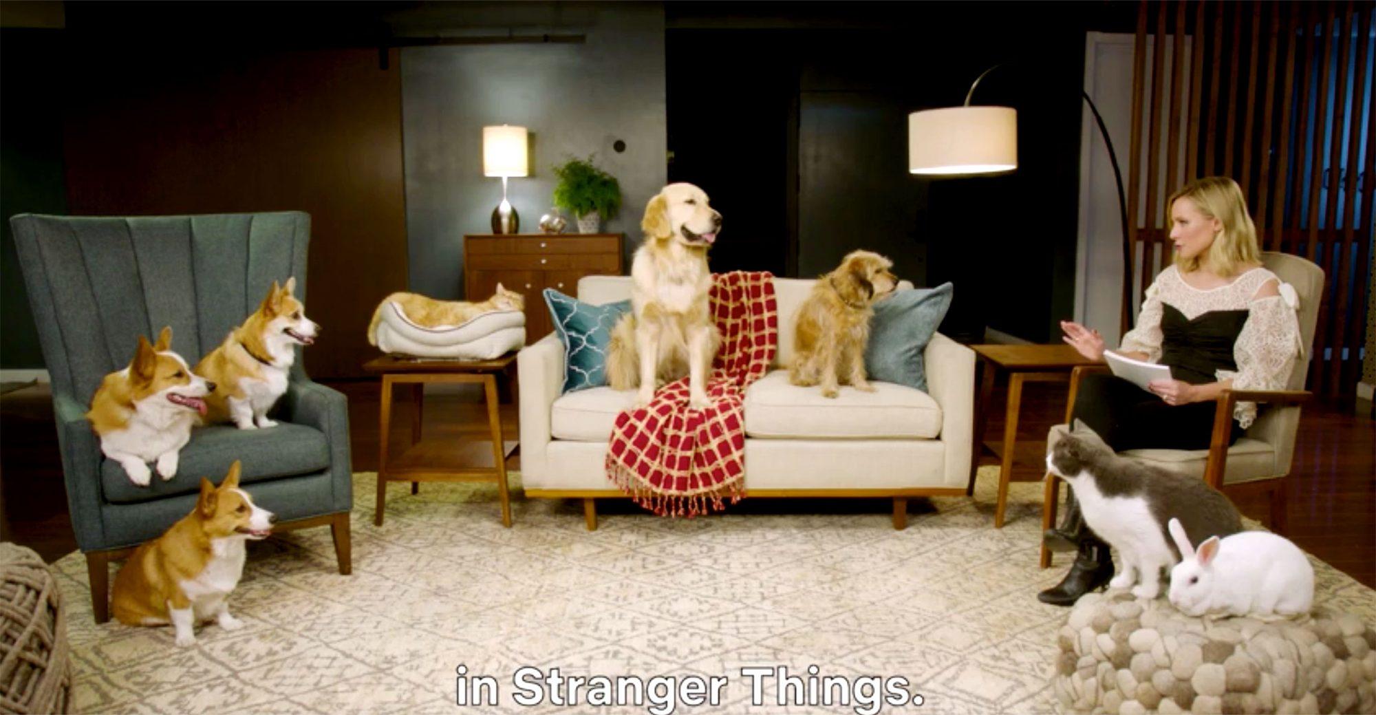 Kristen Bell interviews Netflix's dog stars Credit: Netflix