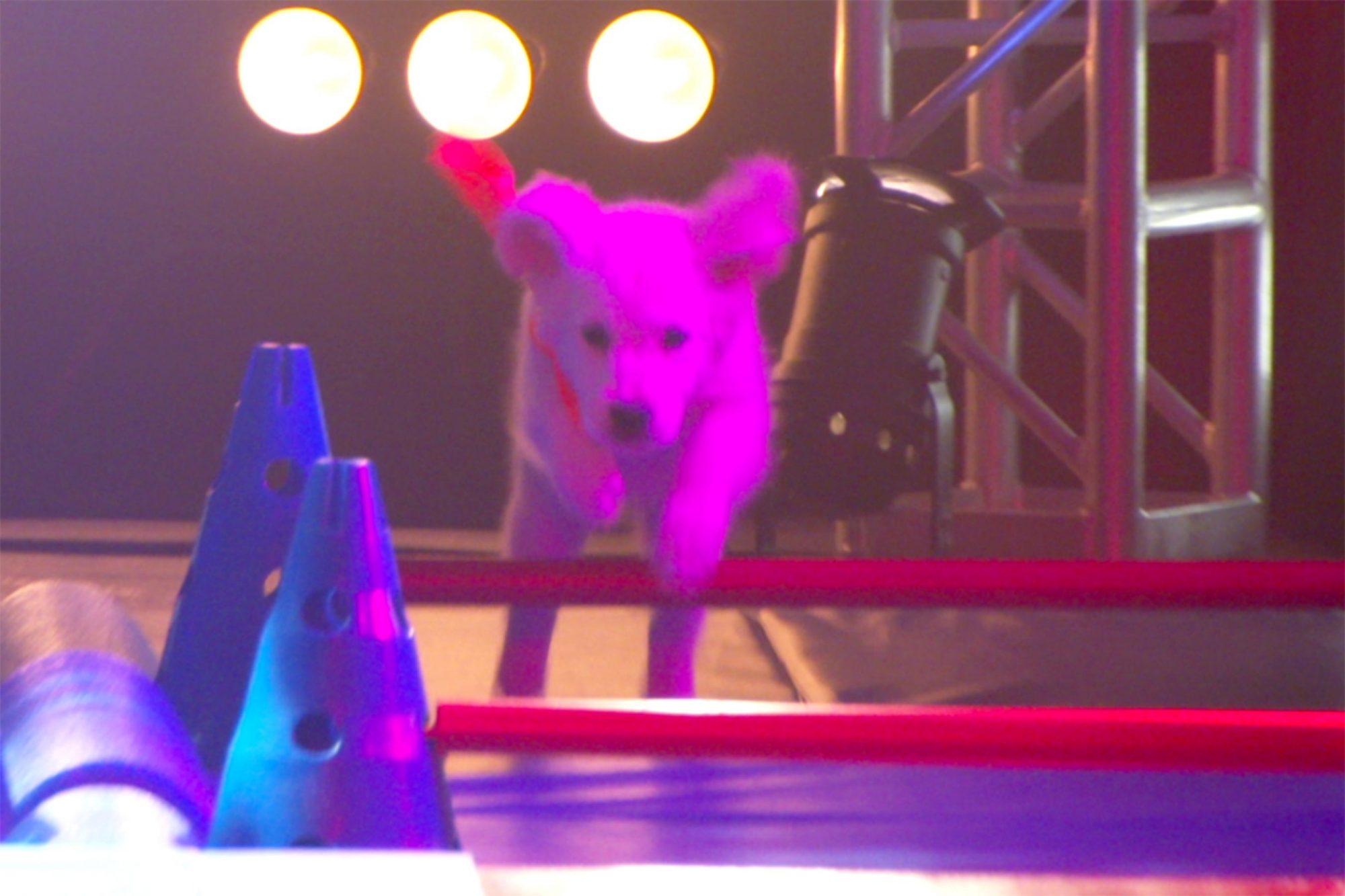 Puppy3[2]