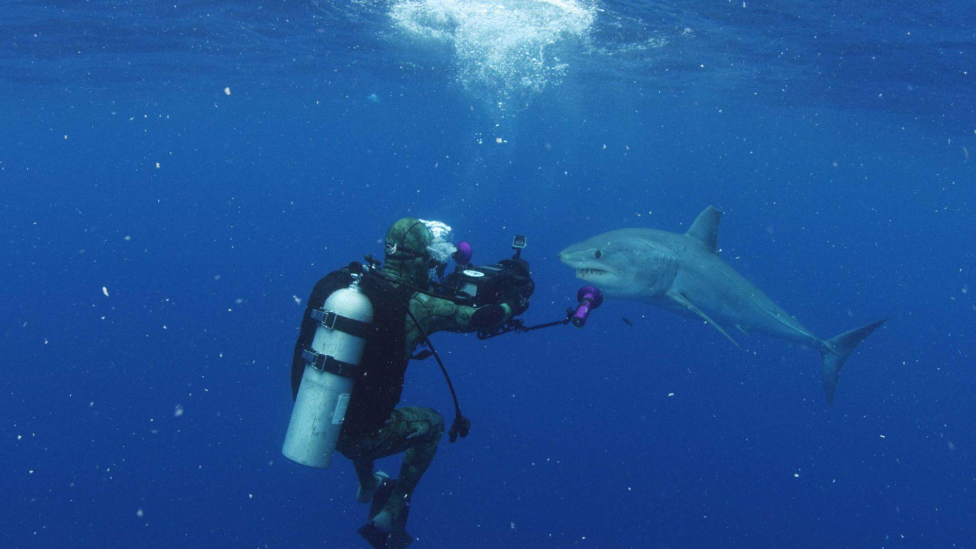 Cuba's Secret Shark Lair - Joe amd Mako shark