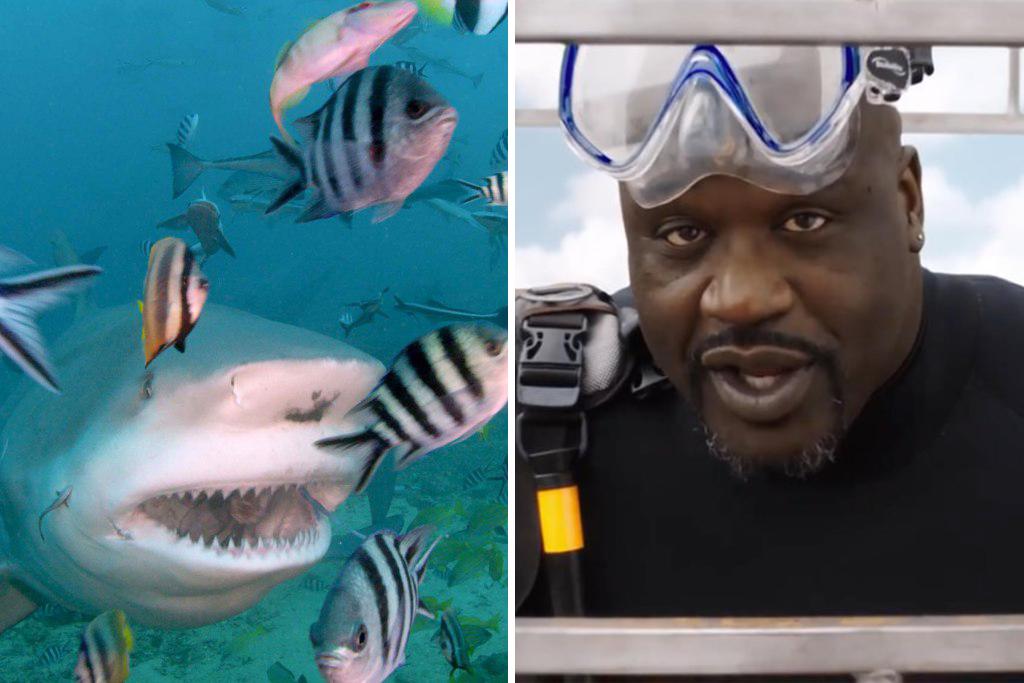 shark-week-shaq