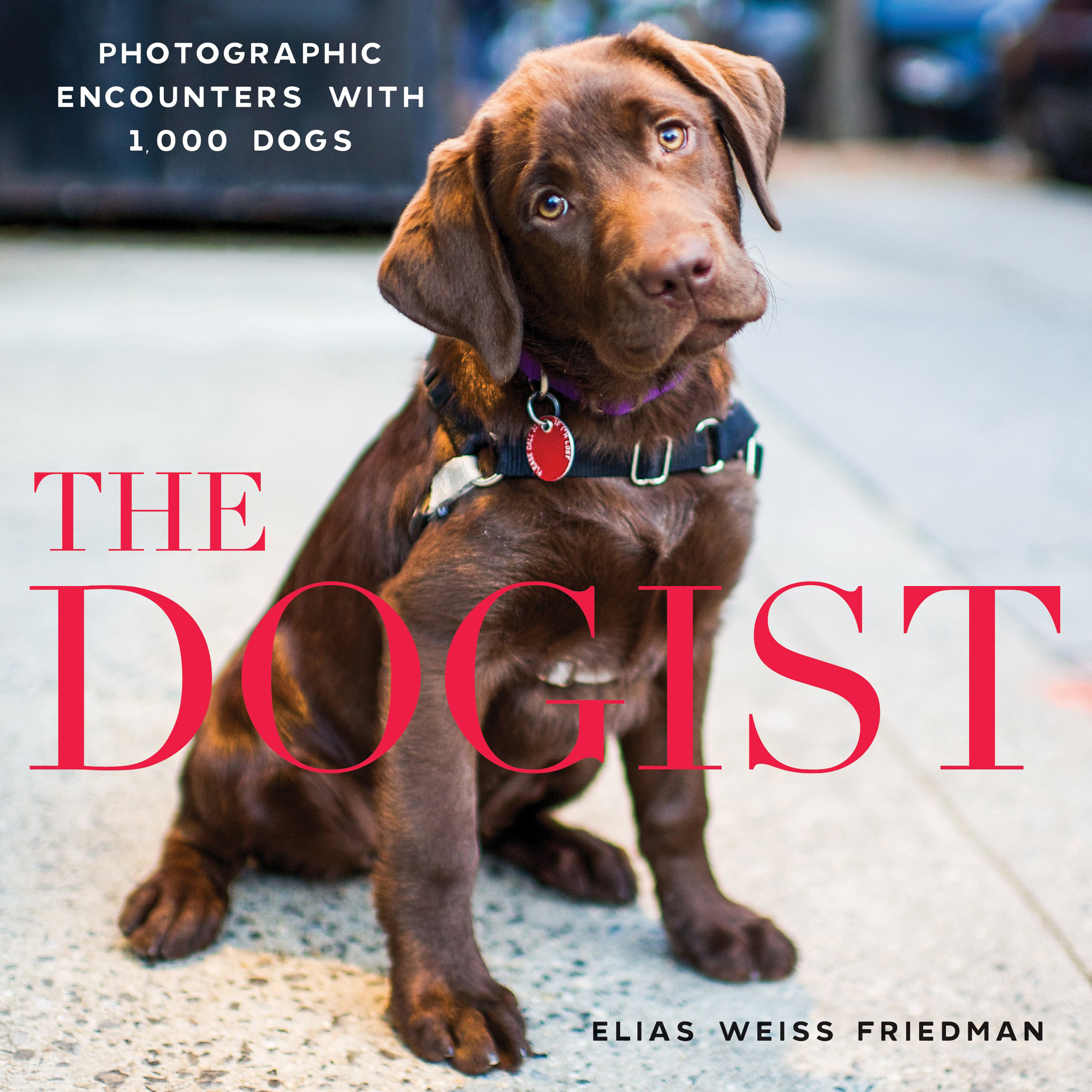 Dogist, The Hardcoverby Weiss (Author), Elias Friedman (Author)