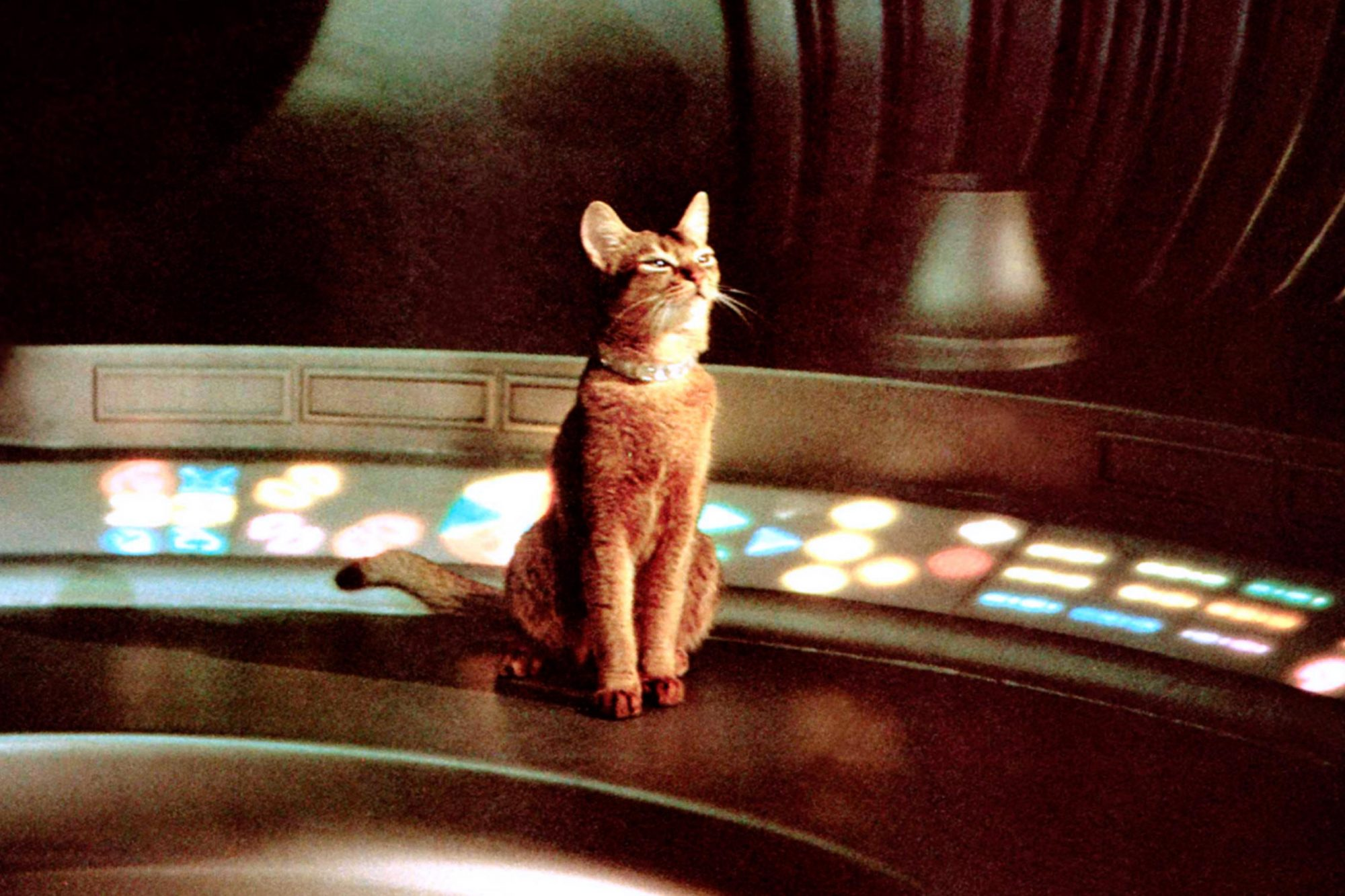 THE CAT FROM OUTER SPACE, 1978, © Buena Vista/courtesy Everett Collection
