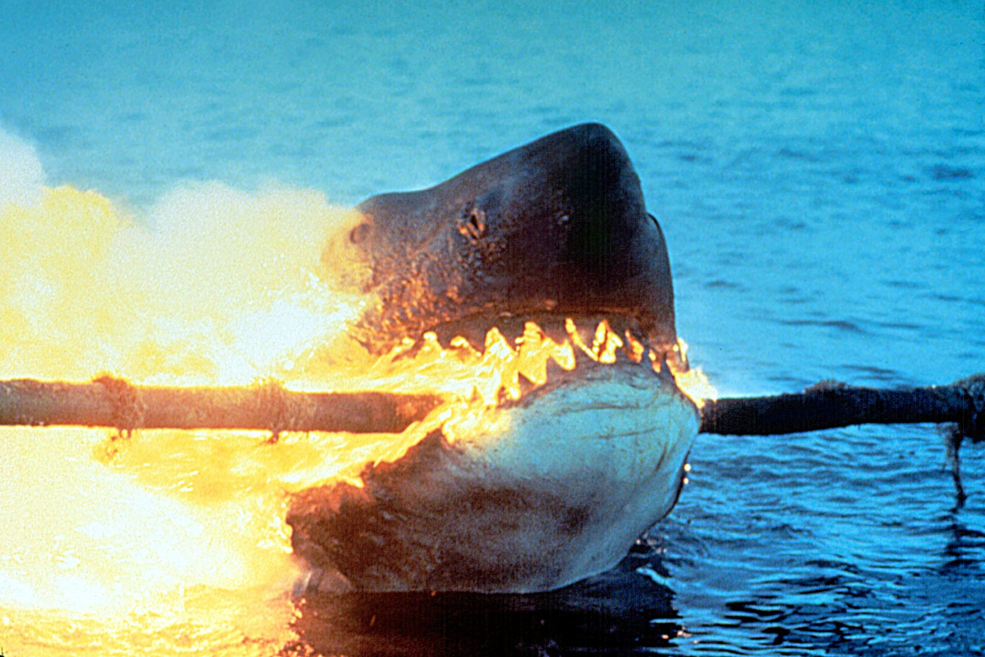 JAWS 2, 1978. © Universal Pictures/ Courtesy: Everett Collection.