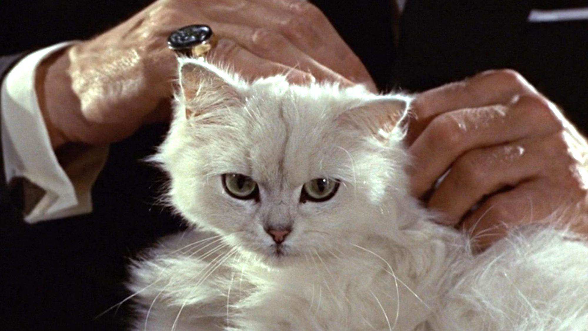 Blofeld's cat from From Russia With Love (screen grab)