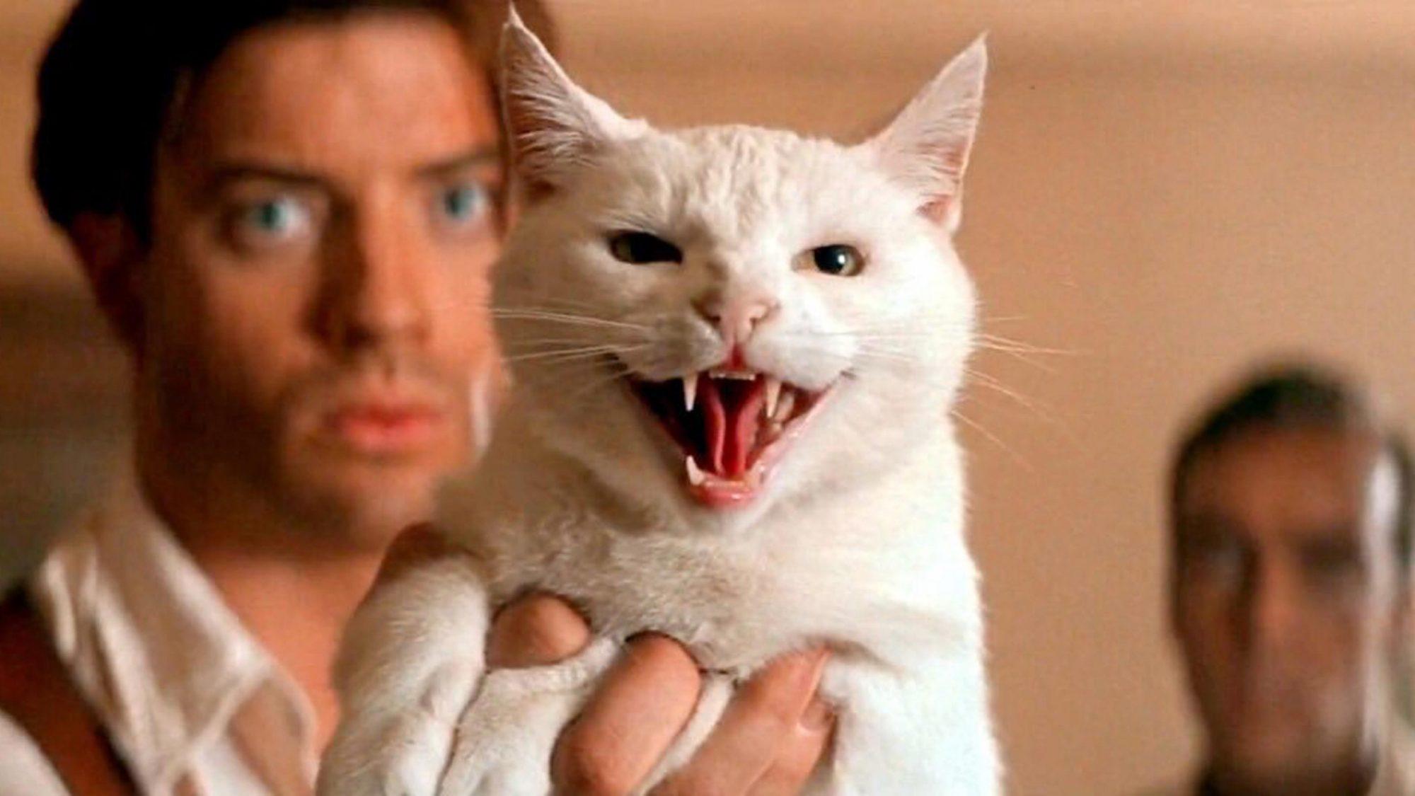 the-mummy-cat