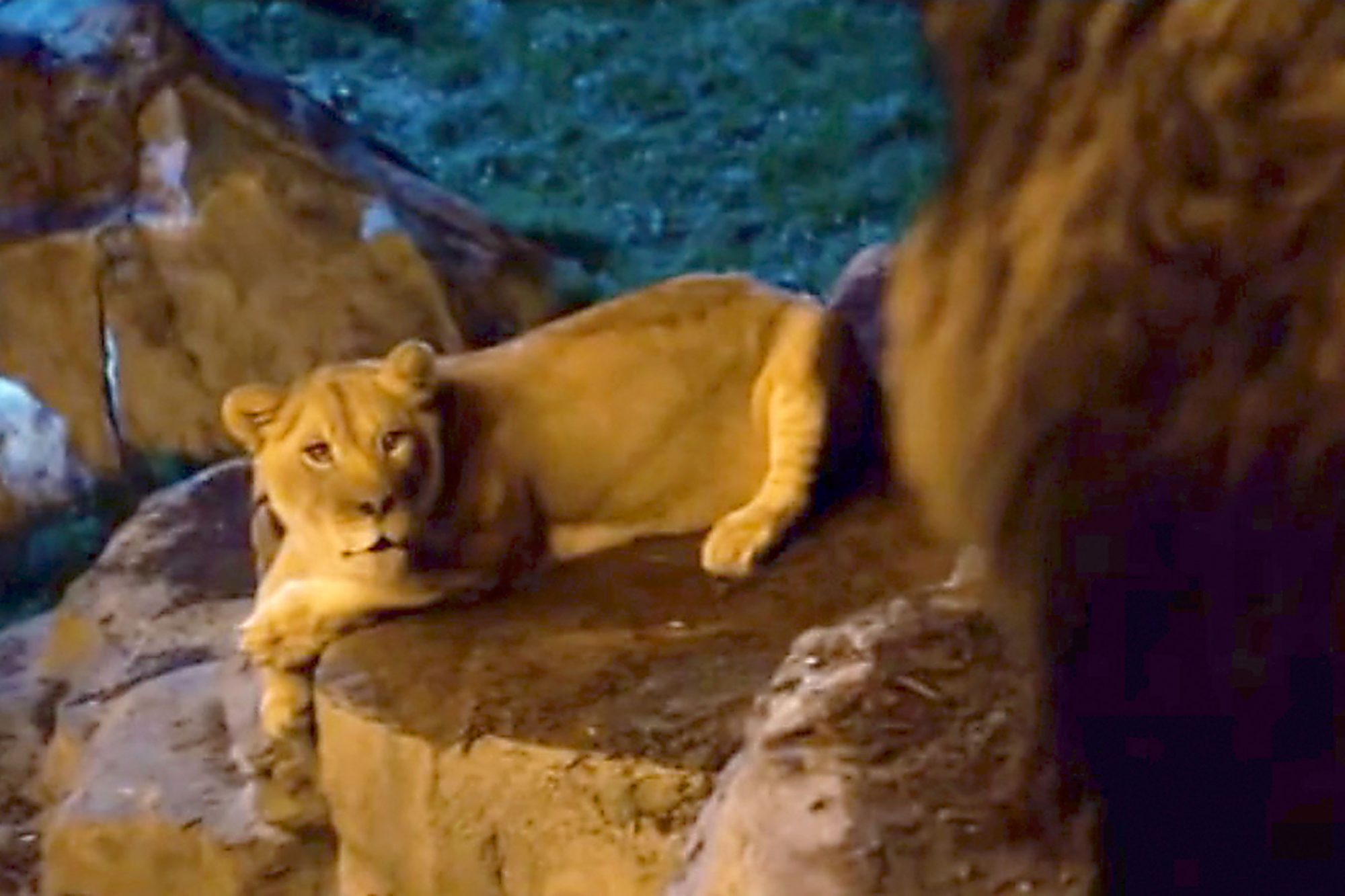 ZookeeperJanet the Lioness (voiced by Cher)