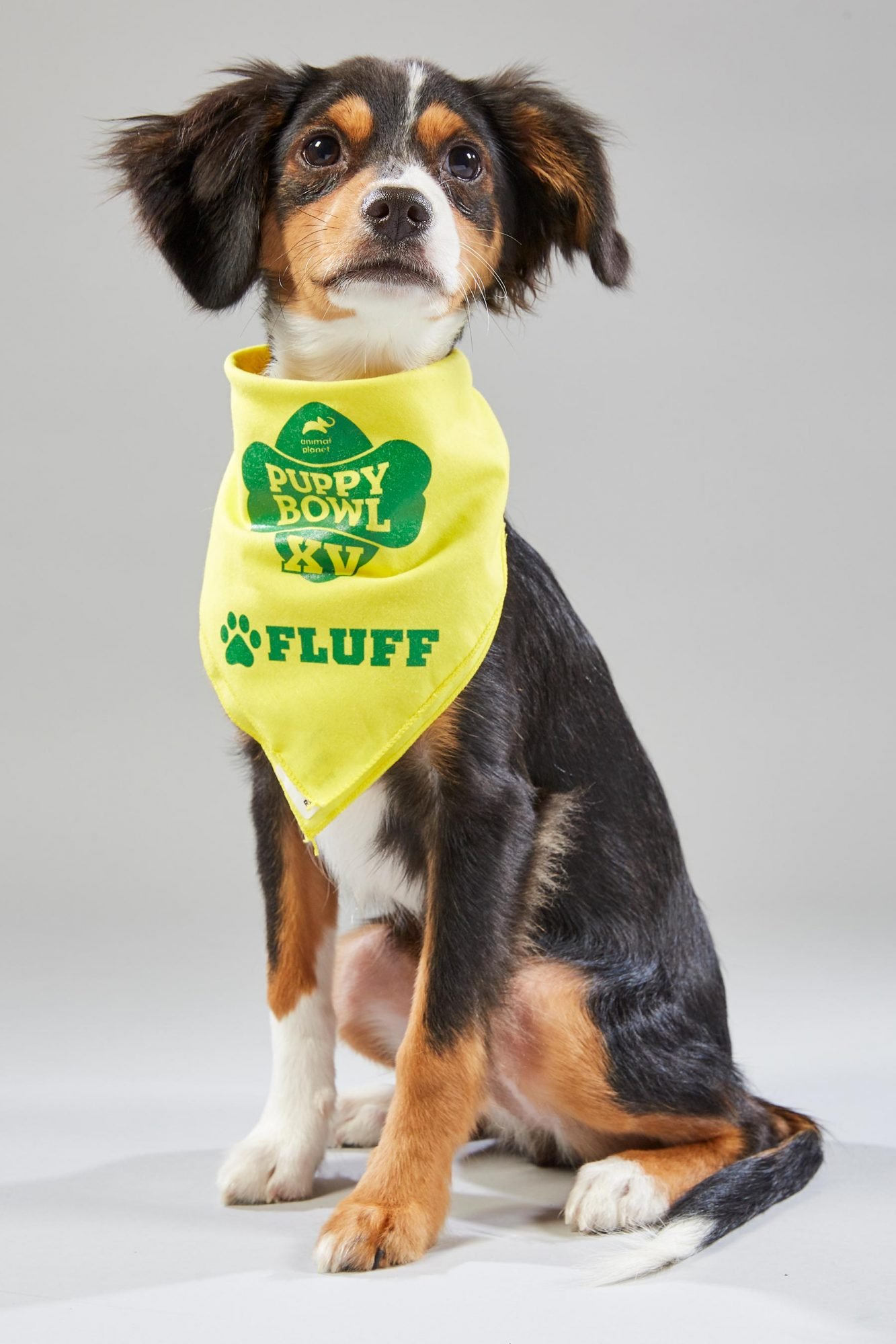 Portraits of puppies for Puppy Bowl XV